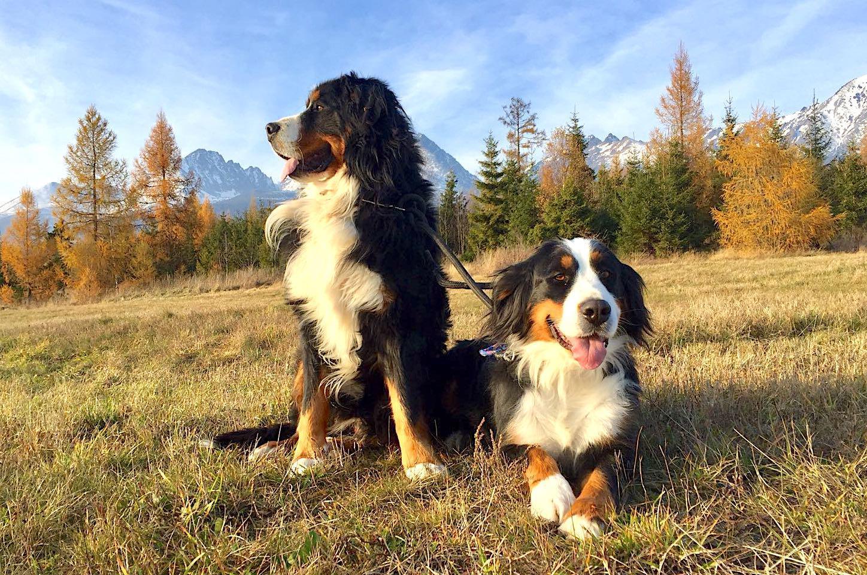 Zveropark-Hubert-hotel-Poprad-Gerlachov-ihrisko-deti-zvierata4