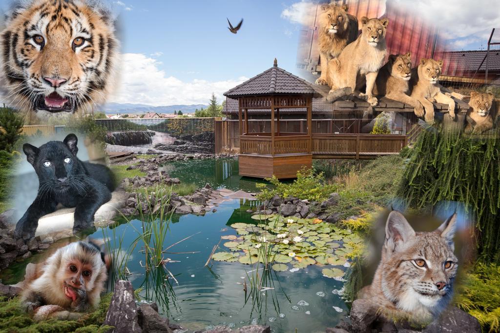 wild park resort velka lomnica